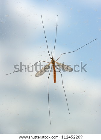 Mosquito bug on window