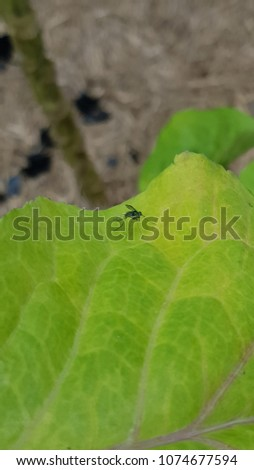 Mosquito landed on leaf #1074677594