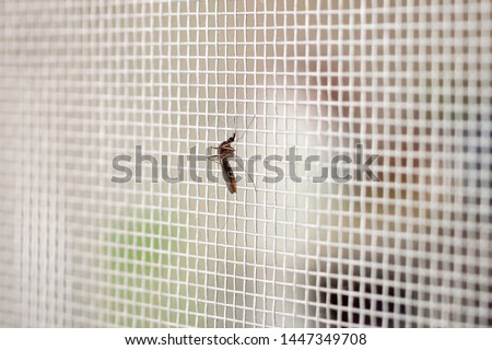 mosquito on insect net wire screen close up on house window #1447349708