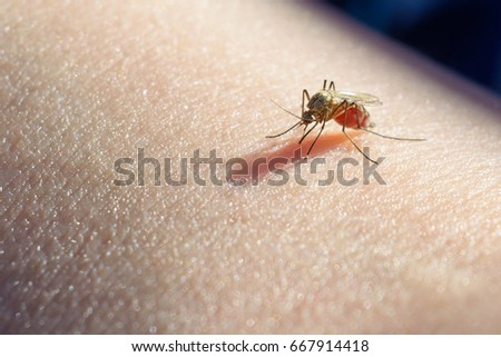 Mosquito sucked blood on human skin. Season of mosquitoes