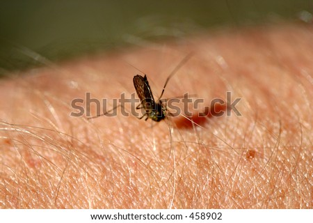 mosquito sucking blood from human arm