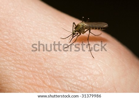 mosquito sucking blood from human hand