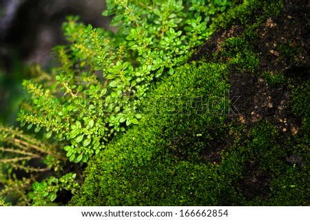 Moss : a little plant on the rock.