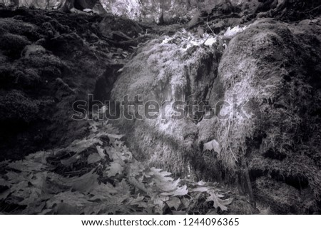 Moss And Ice Covered Boulders Forest Gully, Black And White Infrared Photography