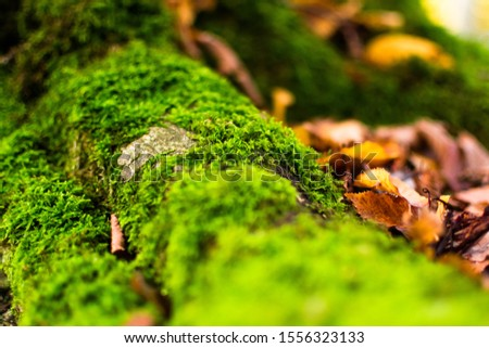 moss and leafs on the ground #1556323133