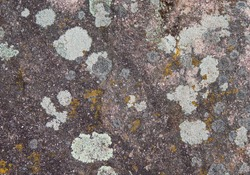Moss and lichen growing on the rock
