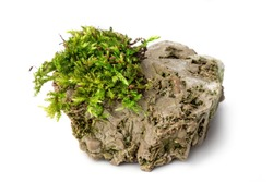 Moss and rock on white background isolated