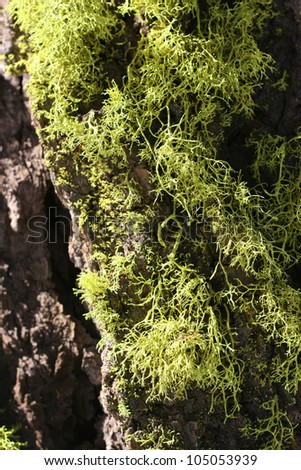 Moss and Tree Texture