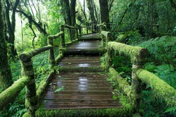 Moss around the wooden walkway in rain forest - Chiang Mai Province, Thailand