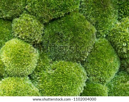 Moss background closeup #1102004000