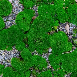 moss. bright green moss, in the forest. natural autumn background. in the sun, on a summer or spring day. old autumn moss green background for text. Close-up. macro photo, beauty in nature