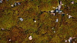 moss. bright yellow-green moss, in the forest. natural autumn background. stones lie on moss, in the sun, on a summer or spring day. old autumn moss green background for text. Close-up