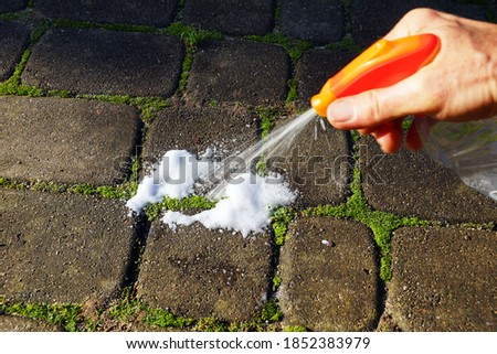 Moss control spray. Paving stones with ingrown moss.