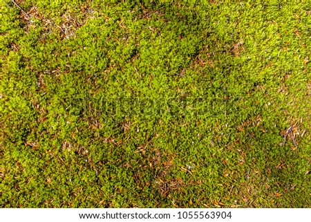 Moss covered forest floor seen from above with some tiny twigs and debris and very light, diagonal shadows