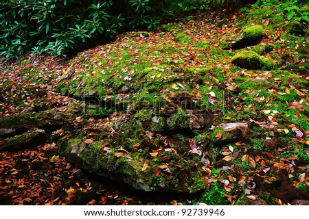 Moss covered rocky ledge in the mountains of west virginia during full autumn and fall colors