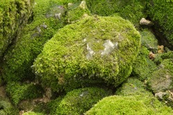 Moss-covered stone