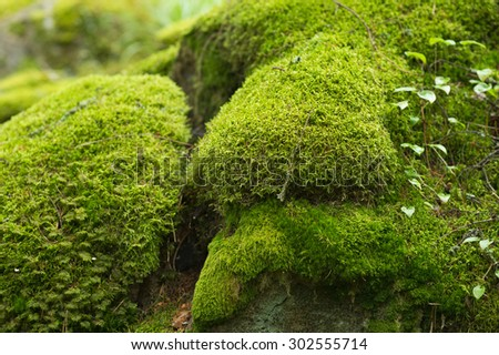 Moss covered stones in the forest. #302555714
