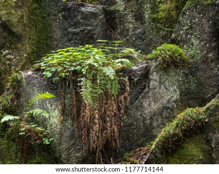 Moss, ferns and other green plants growing on a rock wall in the grove after autumn rain