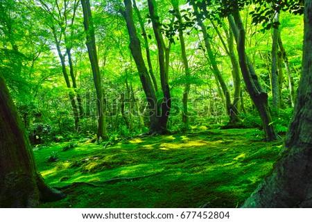 Moss forest #677452804