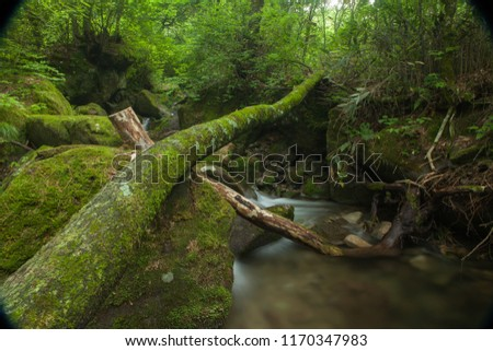 moss forest in the valley