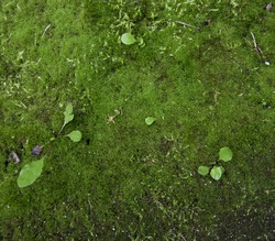 moss green background. sprouts of grass. the background image