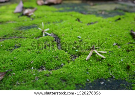 Moss Green Fresh Background nature