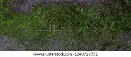 Moss green grunge  texture. Moss background. Green moss on grunge texture, background #1240727731