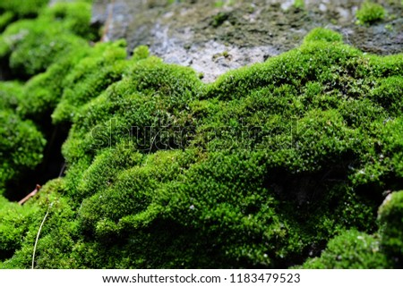 Moss green in the rainy season, then refreshing. #1183479523