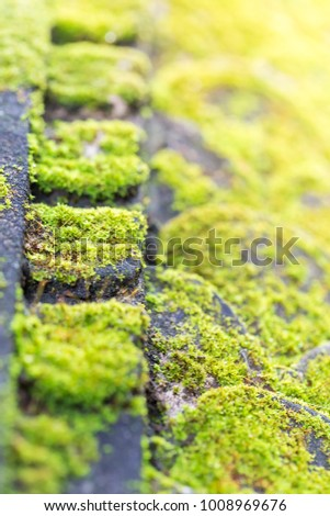 Moss Green Natural Grass #1008969676