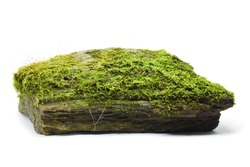 Moss green on rock on white background.