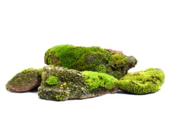 Moss green on rock, white background.