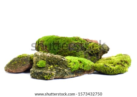 Moss green on rock, white background. Сток-фото ©