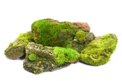 Moss green on stone on white background.