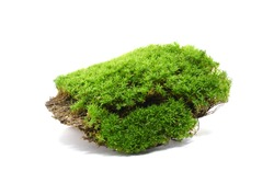 Moss green on white background.