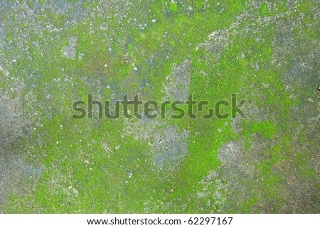 Moss grow on a concrete pavement - stock photo