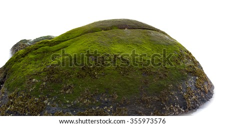 Moss grow on sea rock on white background.