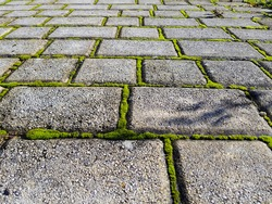 Moss growing between the cobblestones of the road