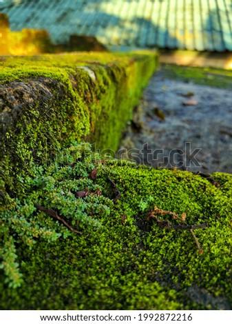 moss growing on damp walls