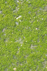 Moss growing on the concrete floor.