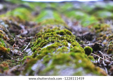 Moss grows on the roof #1228111459