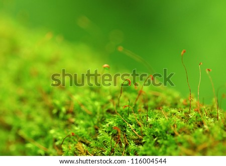 Moss In Close-up