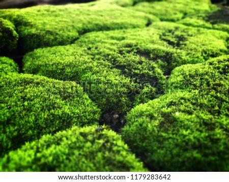 Moss Lichen green color #1179283642