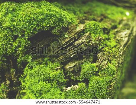 Moss macro shot #554647471