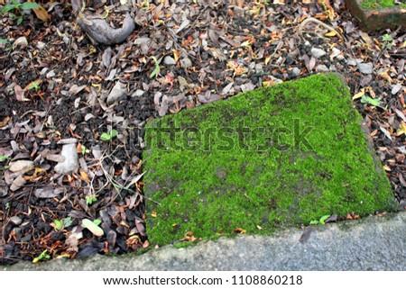 Moss moss, Moss background. Green moss on grunge texture #1108860218