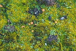 Moss, mushrooms and snail shell covering the ground, top view.