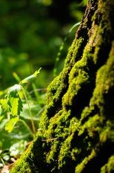 moss on a tree trunk macro photo