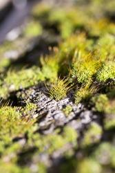 moss on concrete. macro