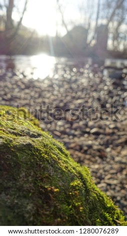 Moss on Rock #1280076289
