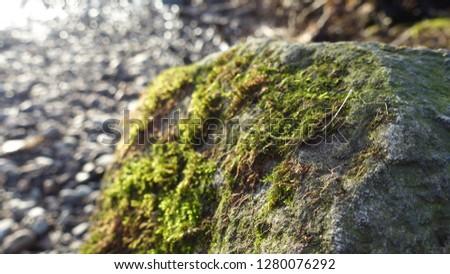Moss on Rock #1280076292