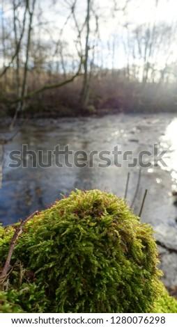 Moss on Rock #1280076298